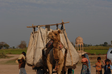 camels for transportation Find camel from a vast selection of transportation get great deals on ebay.
